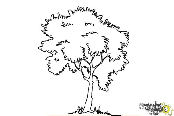 How to Draw a Simple Tree - Step 9