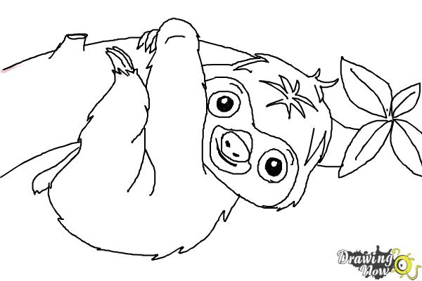 How to Draw a Sloth - Step 15