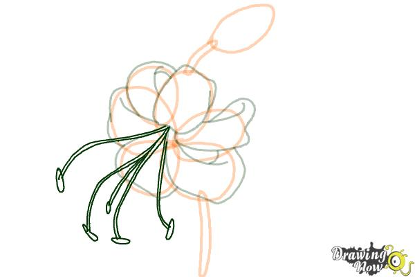 How to Draw a Tiger Lily - Step 7