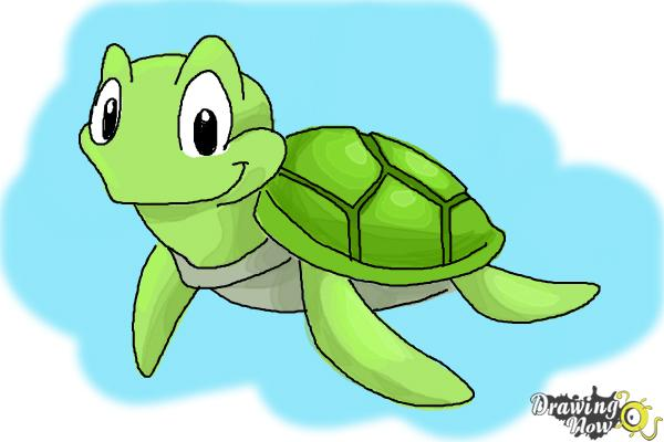 How To Draw A Tortoise Drawingnow
