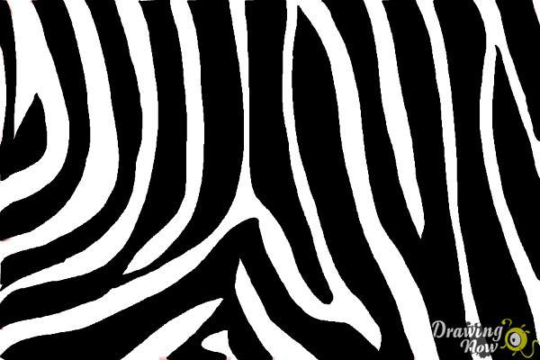 How to Draw Zebra Print - Step 9