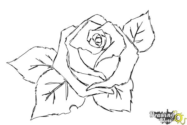 How to Draw a Beautiful Rose - Step 8