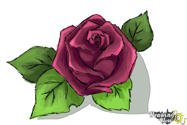 How to Draw a Beautiful Rose - Step 9