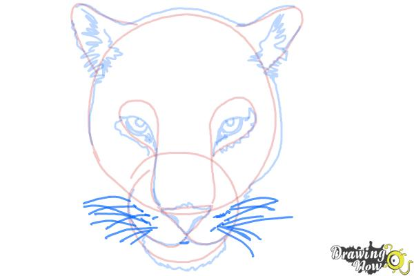 How to Draw a Cheetah Face - Step 10