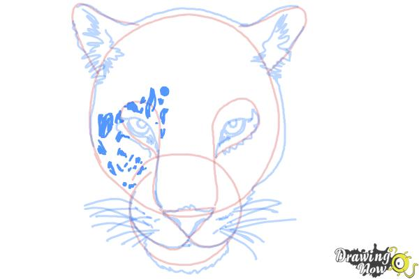 How to Draw a Cheetah Face - Step 11