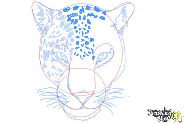 How to Draw a Cheetah Face - Step 13