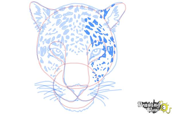 How to Draw a Cheetah Face - Step 14