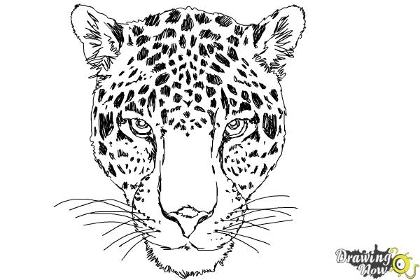 How to Draw a Cheetah Face - Step 15