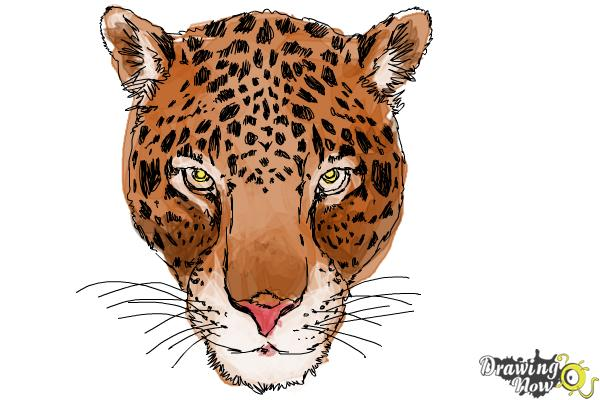 How to Draw a Cheetah Face - Step 16