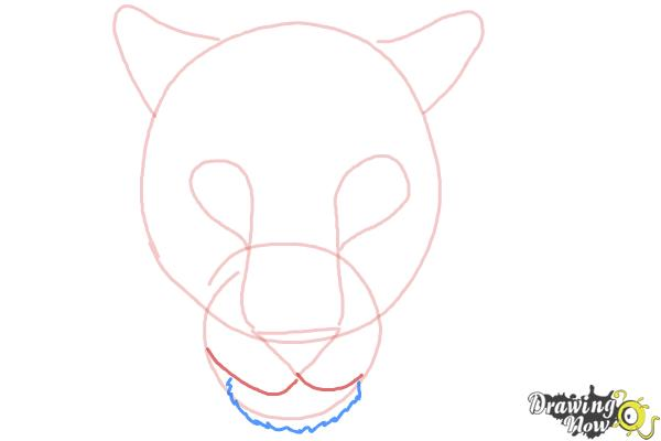 How to Draw a Cheetah Face - Step 5