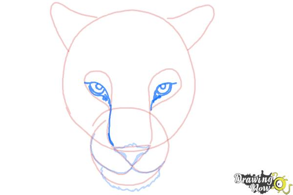 How to Draw a Cheetah Face - Step 7
