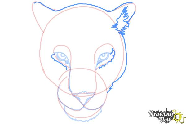 How to Draw a Cheetah Face - Step 8
