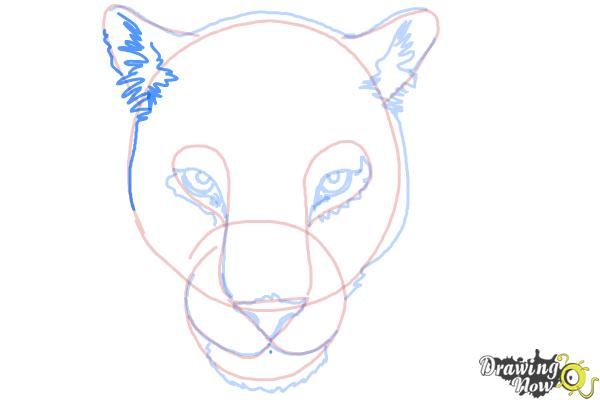 How to Draw a Cheetah Face - Step 9