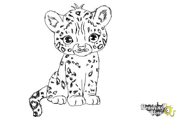 How to Draw a Cartoon Cheetah - DrawingNow