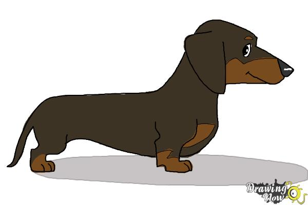 How to Draw a Dachshund - Step 10