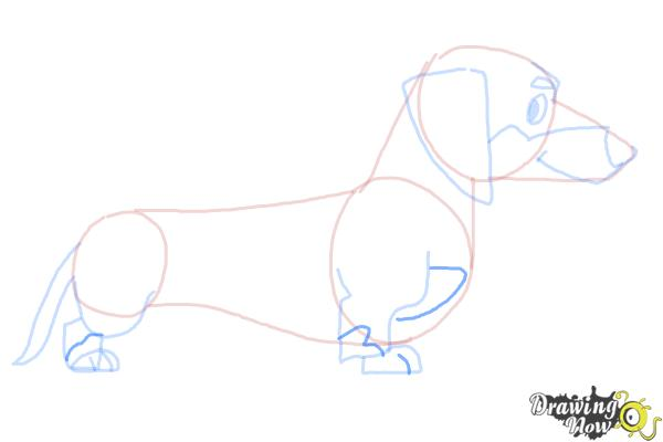 How to Draw a Dachshund - Step 8