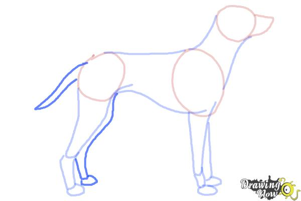 How to Draw a Dalmatian - Step 6