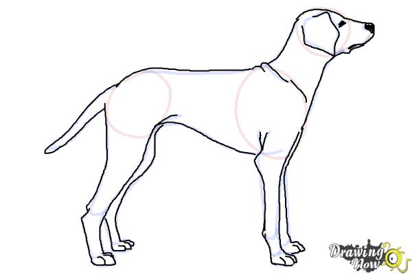 How to Draw a Dalmatian - Step 8