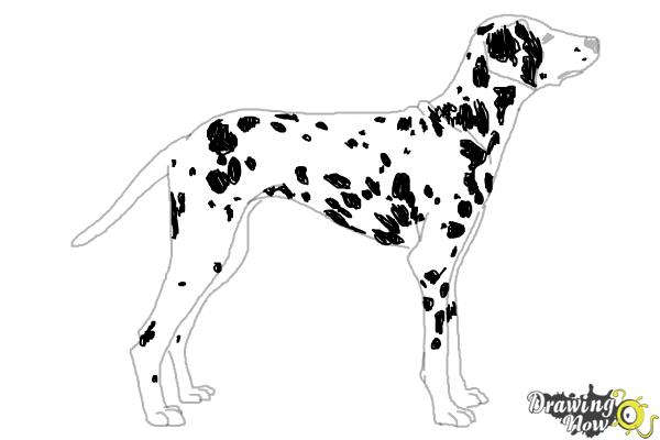 How to Draw a Dalmatian - Step 9