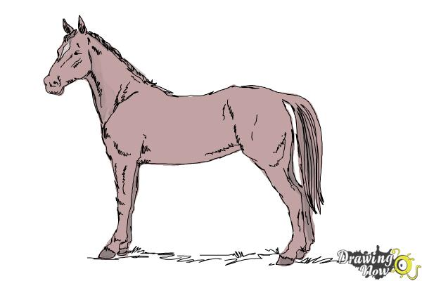 How to Draw an Easy Horse - Step 10