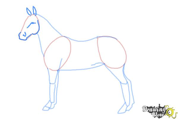 How to Draw an Easy Horse - Step 5