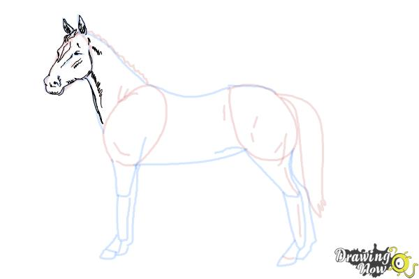 How to draw an easy horse step 7