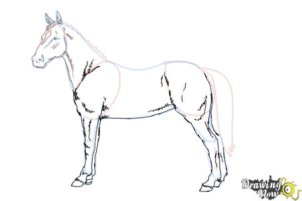 How to Draw an Easy Horse - DrawingNow