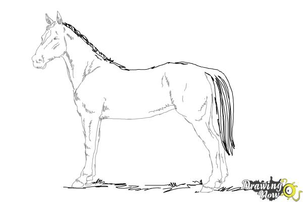 How to draw an easy horse step 9