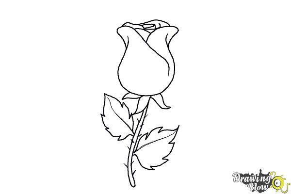 How to draw a rose easy drawingnow how to draw a rose easy step 7 ccuart Image collections