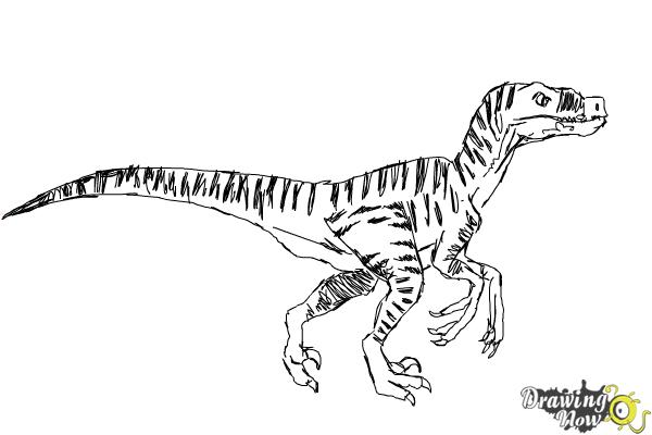 How to Draw a Velociraptor - Step 8