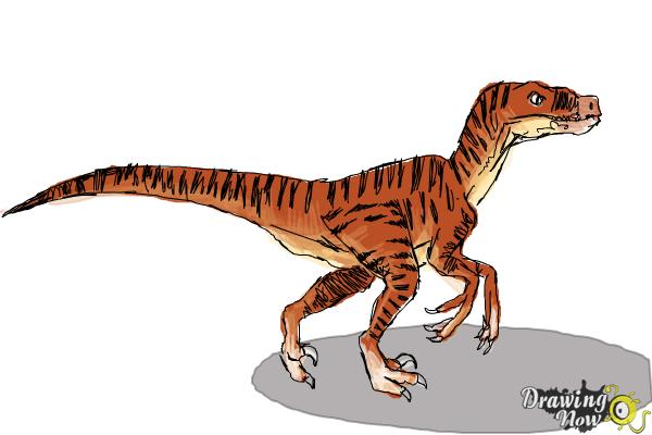 How to Draw a Velociraptor - Step 9