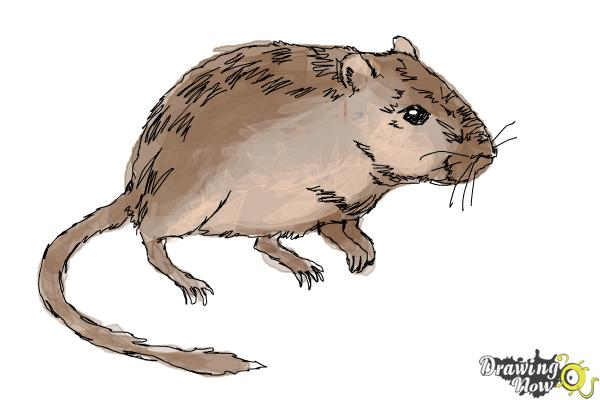 How To Draw A Gerbil Drawingnow
