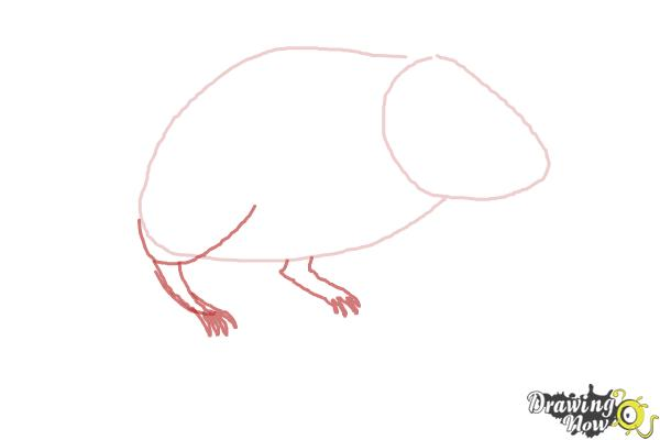 How to Draw a Gerbil - Step 3