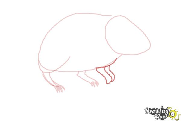 How to Draw a Gerbil - Step 4