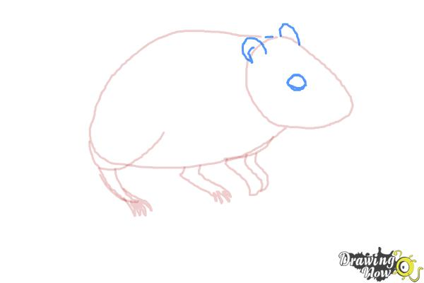 How to Draw a Gerbil - Step 5