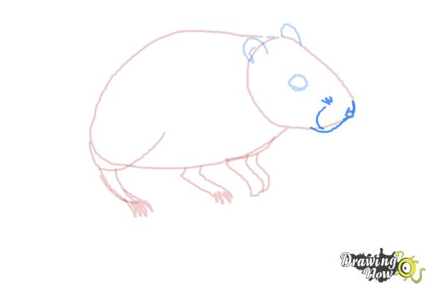 How to Draw a Gerbil - Step 6