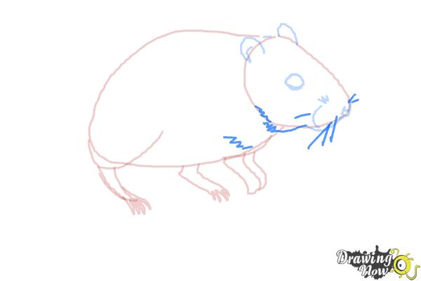 How to Draw a Gerbil - Step 7
