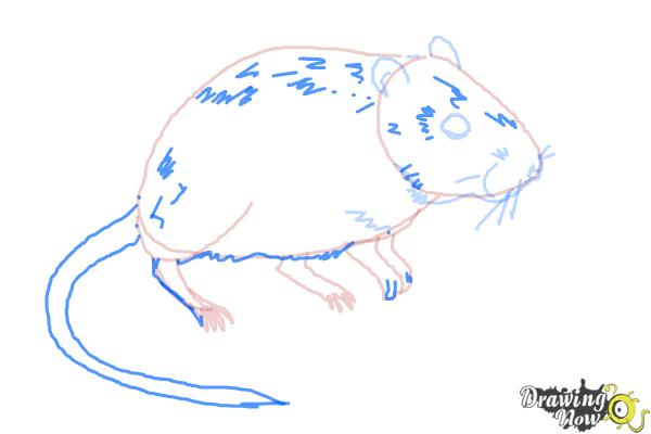 How to Draw a Gerbil - Step 8