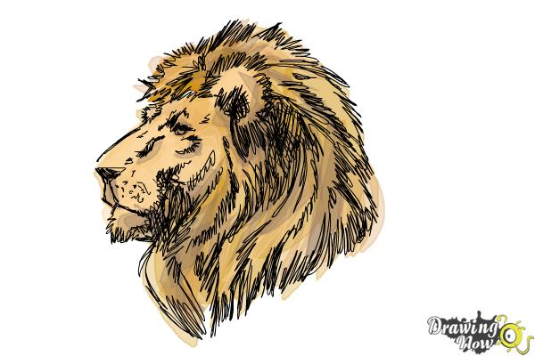 How to Draw a Lion Head - Step 10