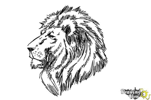 How To Draw A Lion Head Drawingnow