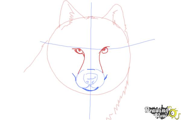 How to Draw a Realistic Wolf - Step 5