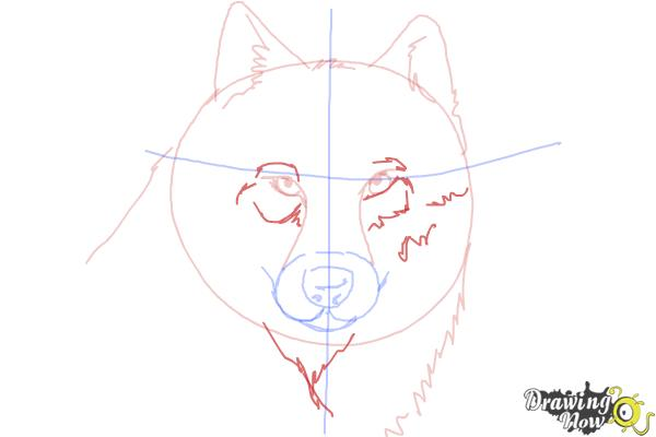 How to Draw a Realistic Wolf - Step 6