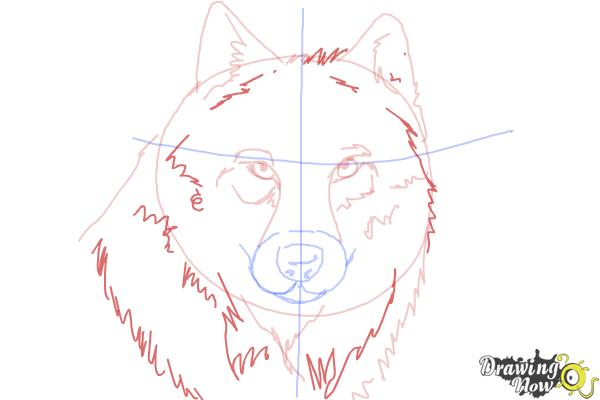 How to Draw a Realistic Wolf - Step 7