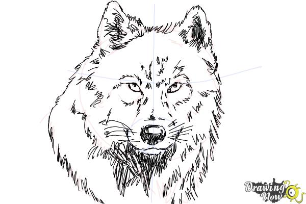 How to Draw a Realistic Wolf - Step 8