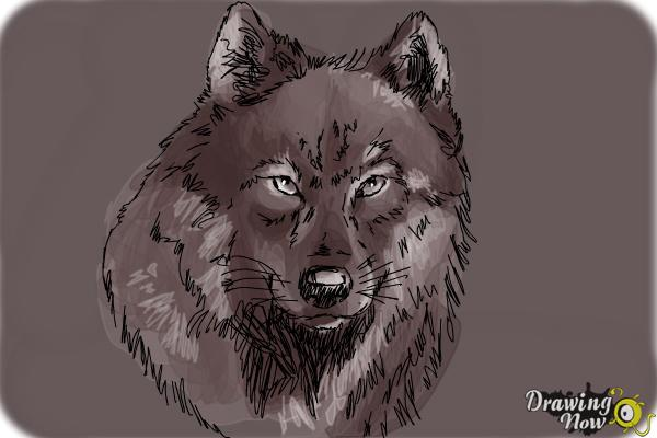 How to Draw a Realistic Wolf - Step 9