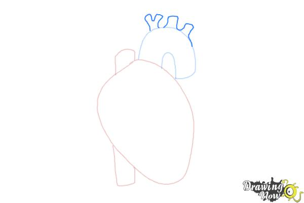 How to Draw a Human Heart - Step 4