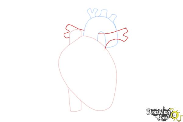 How to Draw a Human Heart - Step 5