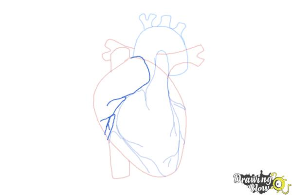How to Draw a Human Heart - Step 8