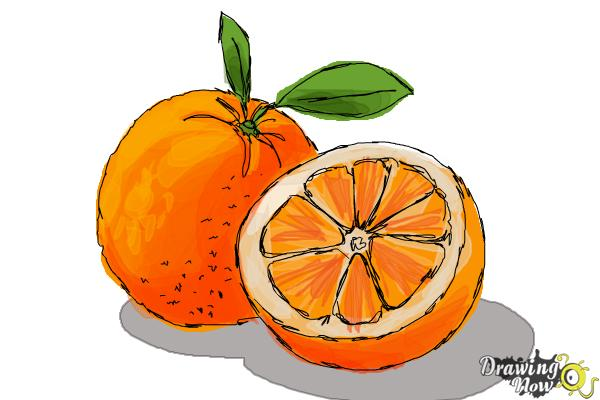 How to Draw an Orange - Step 8