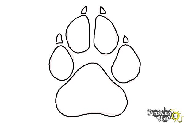 How to Draw a Paw Print DrawingNow